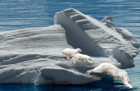 polar-bears-955114_960_720